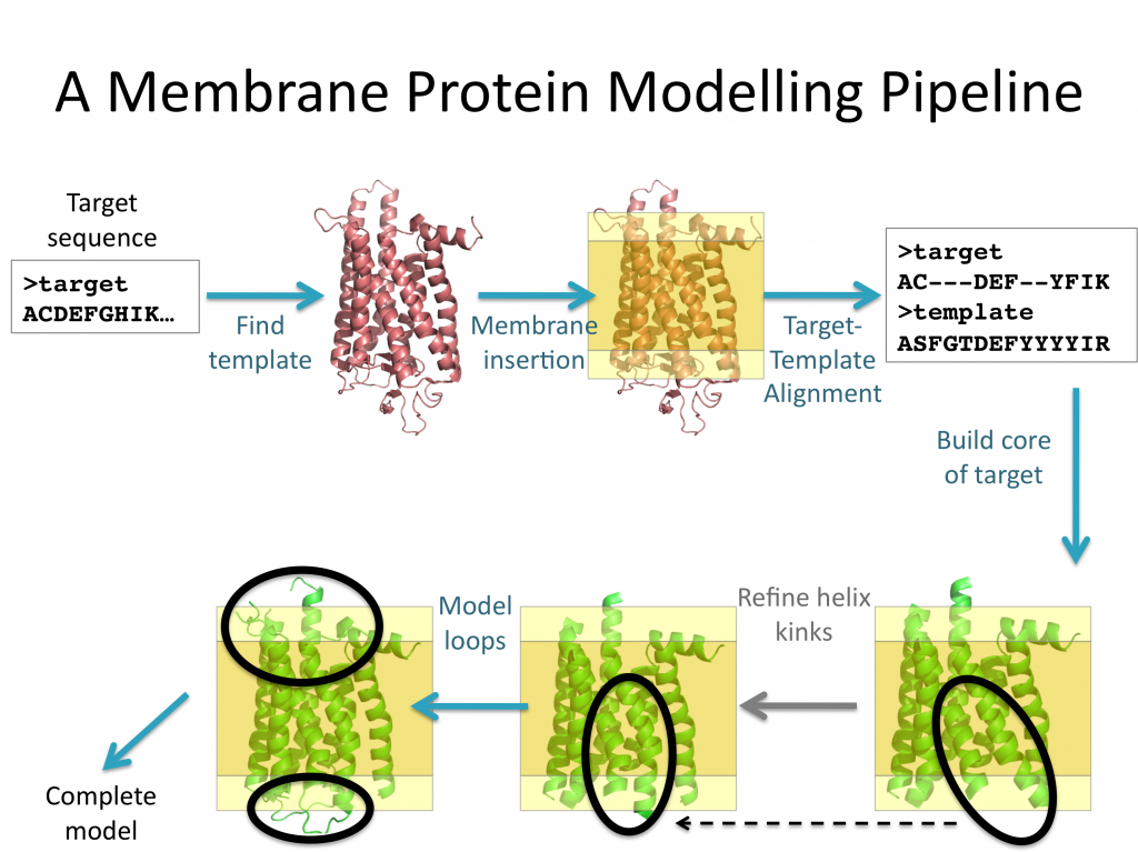 protein homology modelling thesis