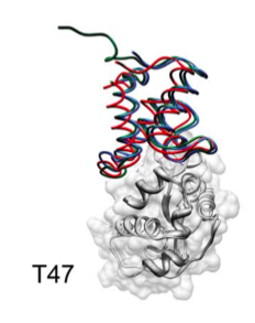 Receptor is shown in white. Best ligand as predictors in red, as scorers in blue.