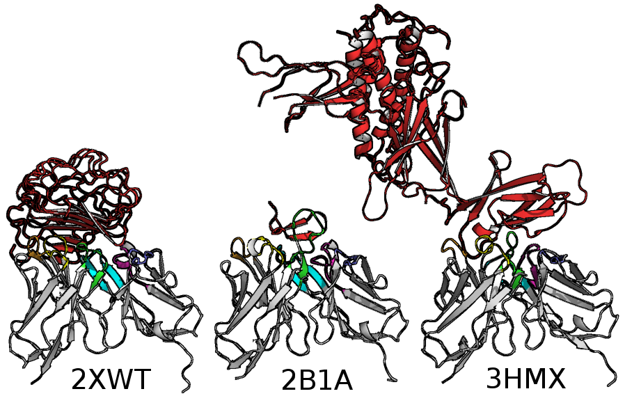 Three antibodies derived from the germline gene 5*51-01, all binding to very different antigens.