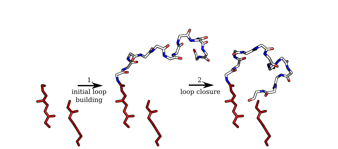 The main steps in the ab initio prediction of protein loops.
