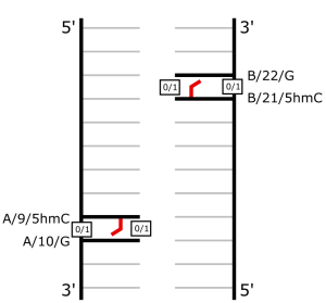 dna_schematic
