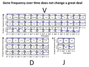 How the frequencies of V, D  and J genes change (not) over 6.5 years in a single individual